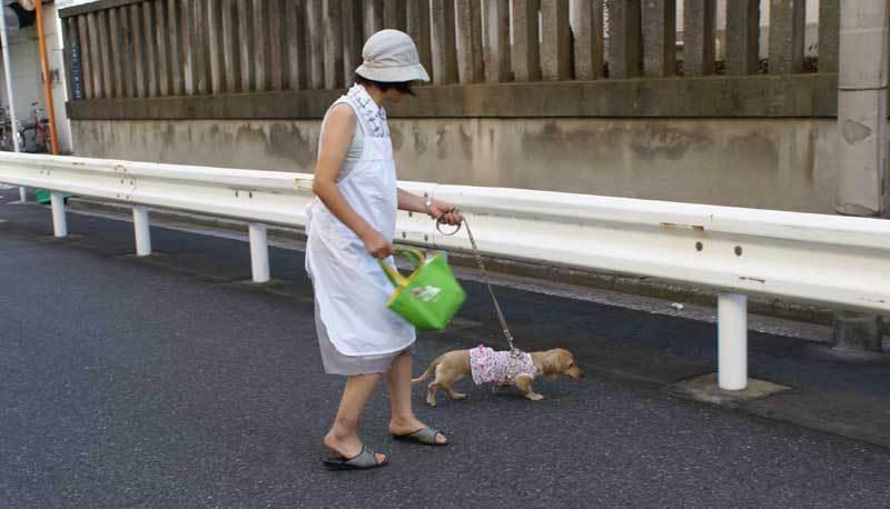 わんちゃん散歩中0908bob_01.jpg