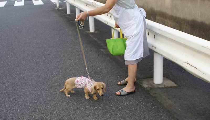 わんちゃん散歩中0908bob_10.jpg