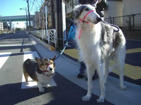 わんちゃん散歩中・110117urara700_04.jpg