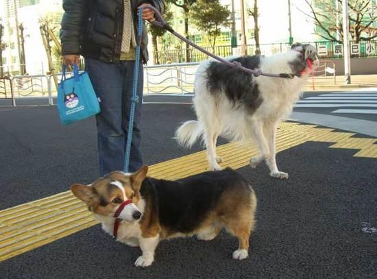 わんちゃん散歩中110117urara700_07.jpg
