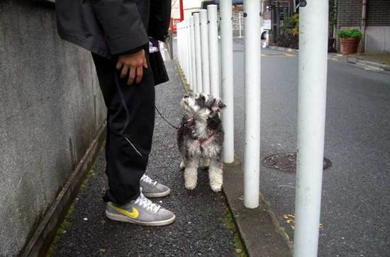 わんちゃん散歩中110212peko01.jpg