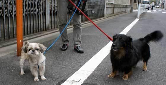 わんちゃん散歩中231104ponta560_1.jpg