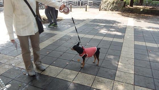 わんちゃん散歩中240706.1.JPG
