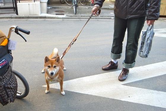 柴犬の銀太